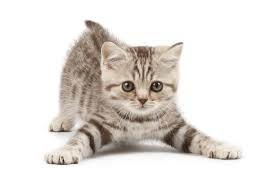 子猫に長生きしてもらうためのご飯