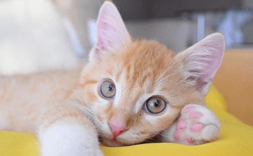 どんな性格の猫と一緒に暮らしたいですか?