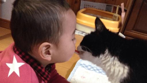 猫の健康に害を及ぼす食べ物ーまとめ