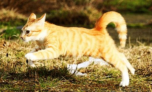 子猫の健康状態で注意するポイント