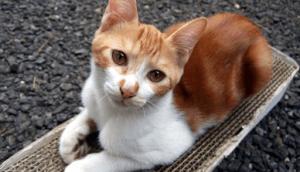 猫を飼うための必需品 爪とぎ