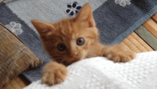 子猫ひらってもうた?