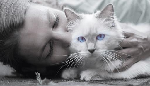 猫を飼う前の心構えーまとめ