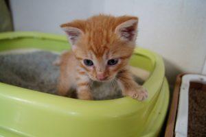 子猫(トイレ)
