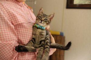子猫(抱っこ)