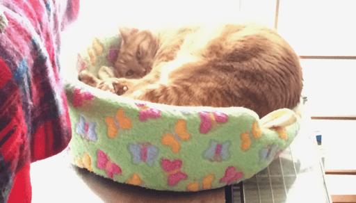 猫を飼うための必需品 猫ベッド