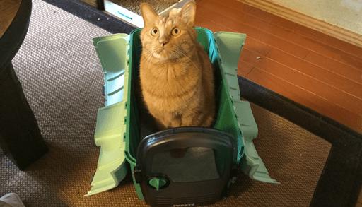 猫を飼うための必需品 キャリーケース