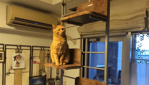 あると便利な猫グッズ 猫タワー