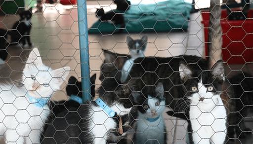 子猫を選ぶ際に注意するポイント
