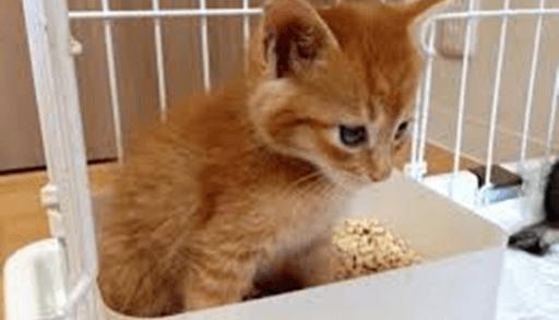子猫から育てるなら必要な猫グッズ 子猫用トイレ
