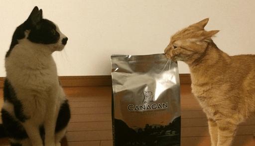 猫を飼うための必需品 キャットフード