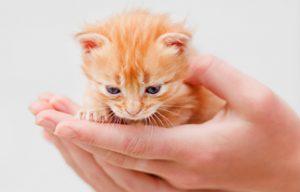 子猫(付き合い方)