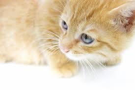 子猫(しぐさから病気を見つける)