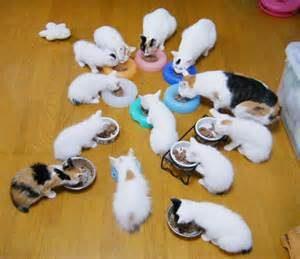 子猫(離乳食)