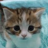 子猫(さびしい)