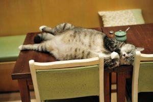 子猫(テーブル)