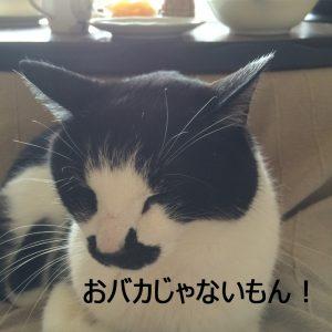 愛猫(ハナに教える)