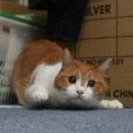 子猫(お尻を振る)