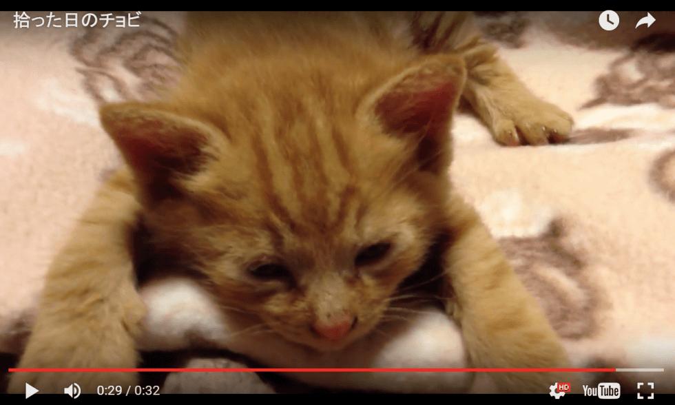 子猫(チョビを拾った日)