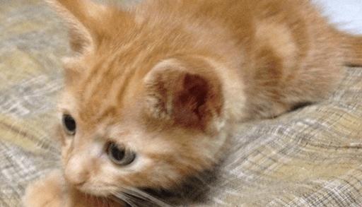 コクシジウム症の子猫のお世話は?