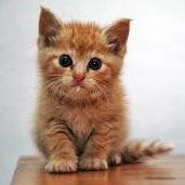子猫(気になる)