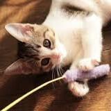 子猫(おもちゃを持ってくる)