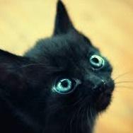 子猫(興味津々)