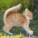 子猫(威嚇)