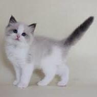 子猫(甘えたい)