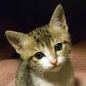 子猫(リラックス)