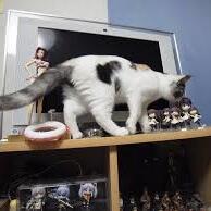 子猫(物を落とす)