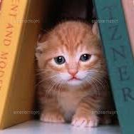 子猫(狭い場所に入る)