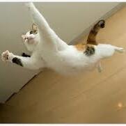 子猫(飛びかかる)