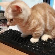子猫(パソコンに乗る)