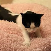 子猫(ふみふみ)