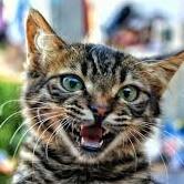 子猫(怒り)
