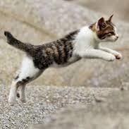 子猫(走り回る)
