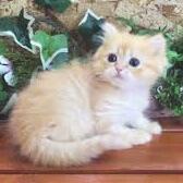 子猫(のんびり)