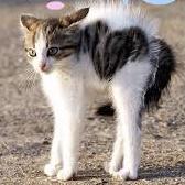 子猫(恐怖)