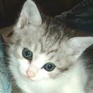 子猫(首をかたむける)