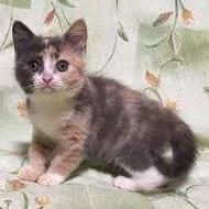 子猫(イライラ)