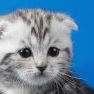 子猫(おびえ)