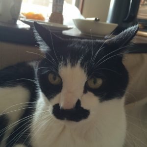 ハナの猫下部尿路疾患のお話