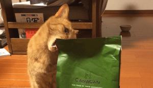 カナガンキャットフードにかみつく猫