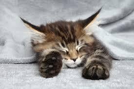 子猫の寝床の作り方