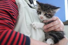 子猫(スキンシップ)