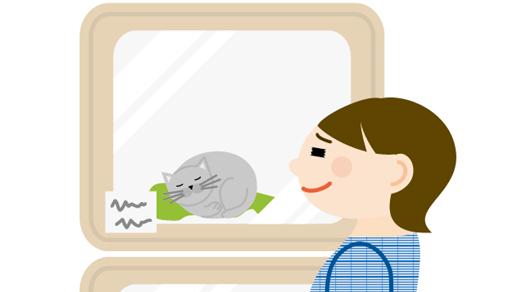 猫と出会う7つの方法ーペットショップで購入する