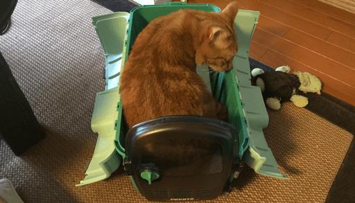 愛猫をキャリーケースに慣れさせるコツ