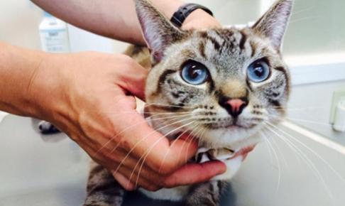 信頼出来る動物病院の見つけ方-愛猫にかかりつけ医はいますか?