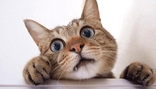 愛猫をキャリーケースに慣れさせるコツ?まとめ